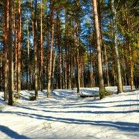 Лес в феврале :: Милешкин Владимир Алексеевич