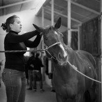 Я люблю свою лошадку, причешу ей шёрстку гладко :: Виталий Латышонок