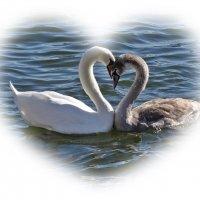 С Днём любящих сердец! :: Swetlana V
