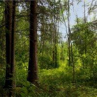 Из леса... :: Юрий