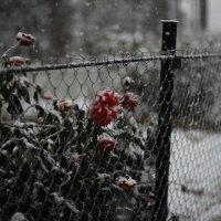 первый снег :: Марина Болотова