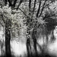 Весенний разлив :: Вадим Смирнов