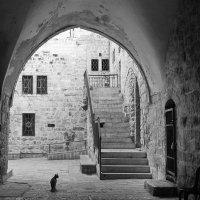 кошки  старого города :: M Marikfoto