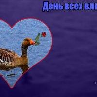 Привет! С Днём всех влюблённых! Спешу к Любимой!  :) Фотосессия одного гусика (серия) :: Nina Yudicheva