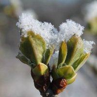 Зима не сдается.... :: Alena Cyargeenka