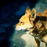 Собака :: Сергей Руденко