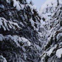 зима :: Alexandr Staroverov