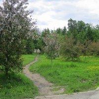 Весна в парке. :: Мила Бовкун