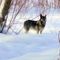 Внимательный пёс. :: Мила Бовкун
