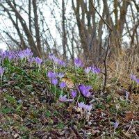 Весна уже в пути! :: Galina Dzubina