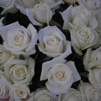Розы :: Булаткина Светлана