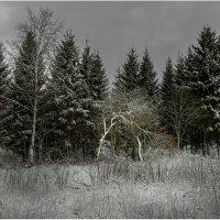 яблони :: yur neliist