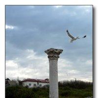 Птица древнего города :: Ольга Голубева