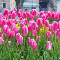 Стамбул Фестиваль тюльпанов :: Swetlana V