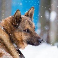 опять снег пошёл... :: Александр Фёдоров