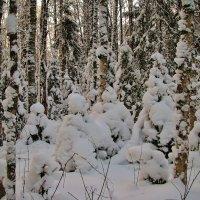 В зимнем лесу. :: Галина .