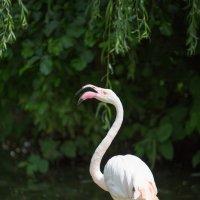 фламинго :: Julia