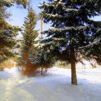 Хорошая погода в феврале . :: Мила Бовкун