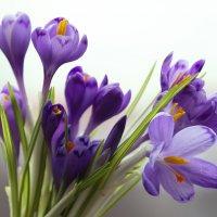 Скоро весна :: Сергей Форос
