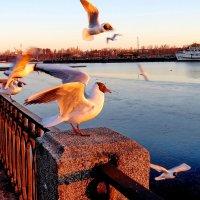 Чайки на заливе... :: Светлана