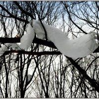 Снежная анаконда)) :: Андрей Заломленков