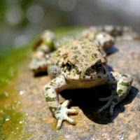 Принцесса-лягушка. :: annet Sagitova