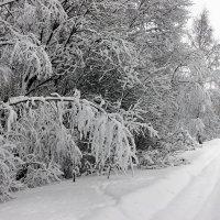 После снегопада :: Николай Белавин