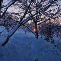 Экскурсия в Гадюкино зимой (40) :: Александр Резуненко