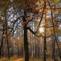 Осеннее тепло. :: Laborant Григоров