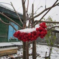 Вот и зима пришла :: Irina Si