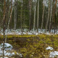 Лесное болото :: Владимир Бобришев