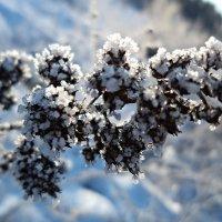 В зимнем наряде :: Елена Смолова