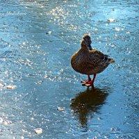 Одиночное фигурное катание :: Nina Yudicheva