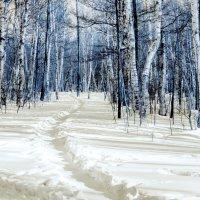 голубой лес :: Инна