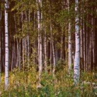 Вход в таинственный лес :: Весна