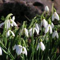 Февральская весна... :: Елена Даньшина