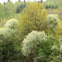 Краски Весны :: Олег Савин