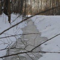 Зимняя канавка :: missis.litsis Елена