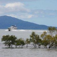 Порт Дуглас.Австралия :: Антонина