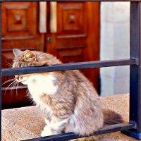 Портрет стеснительной кошки в рамке :: Кай-8 (Ярослав) Забелин