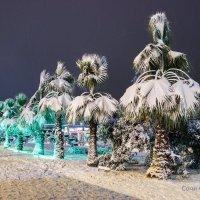 Пальмы в белых шубах :: Evgenе Sochi