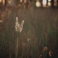 мягкий-мягкий свет :: Екатерина Сергеева
