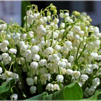 Букет из весны :: Лидия (naum.lidiya)