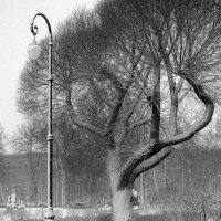 Дерево, фонарь.... :: Valerii Ivanov