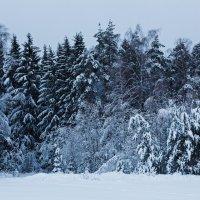 Январский лес :: Aleh Nekipelau