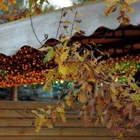 Осень. :: ОЛЕГ ГАШИГУЛЛИН