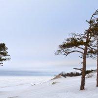 """""""Дюны зимой"""". Белое море, г.Северодвинск. :: Михаил Поскотинов"""