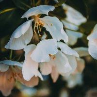 Цветы :: Юлия Доронина