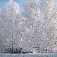 Зима в Сибири :: Колибри М
