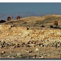 В пустыне Негев. :: Leonid Korenfeld